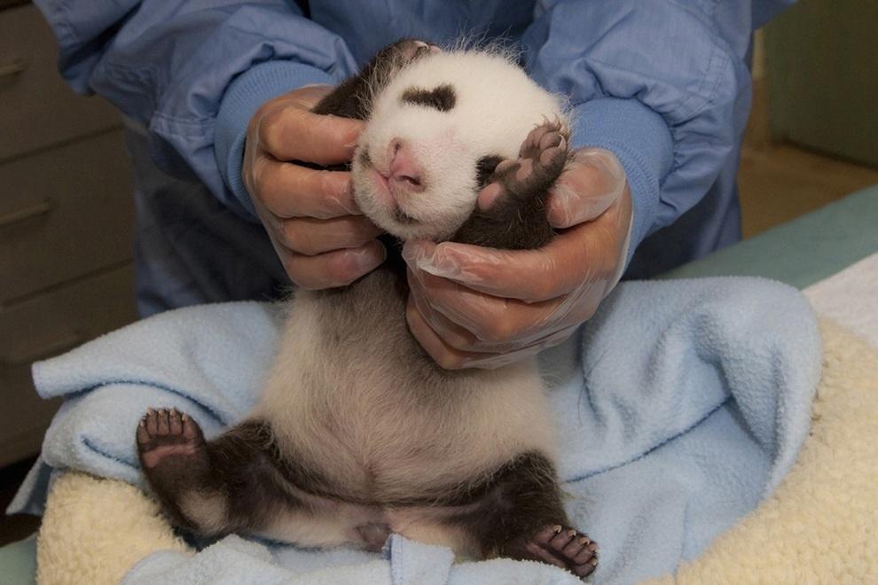 samiemiliedetyonishi 43 Самые милые детеныши животных за 2012 год