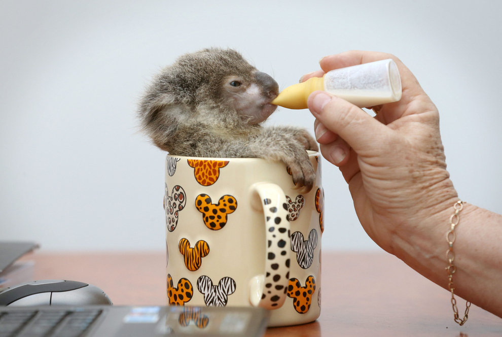 samiemiliedetyonishi 44 Самые милые детеныши животных за 2012 год