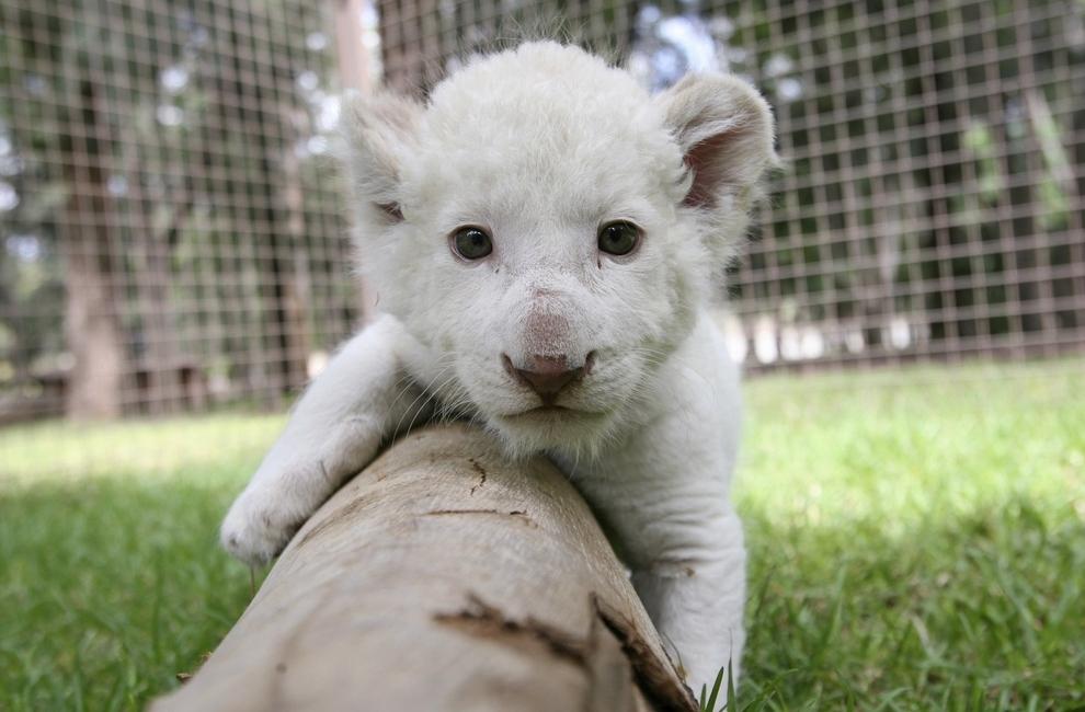 samiemiliedetyonishi 45 Самые милые детеныши животных за 2012 год