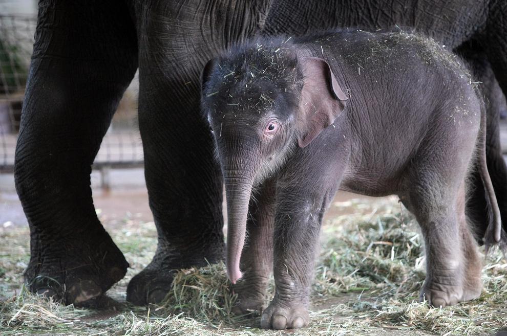 samiemiliedetyonishi 7 Самые милые детеныши животных за 2012 год
