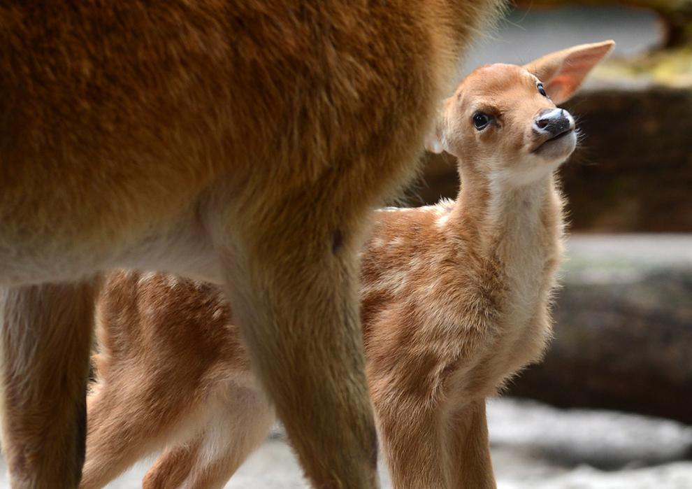 samiemiliedetyonishi 8 Самые милые детеныши животных за 2012 год
