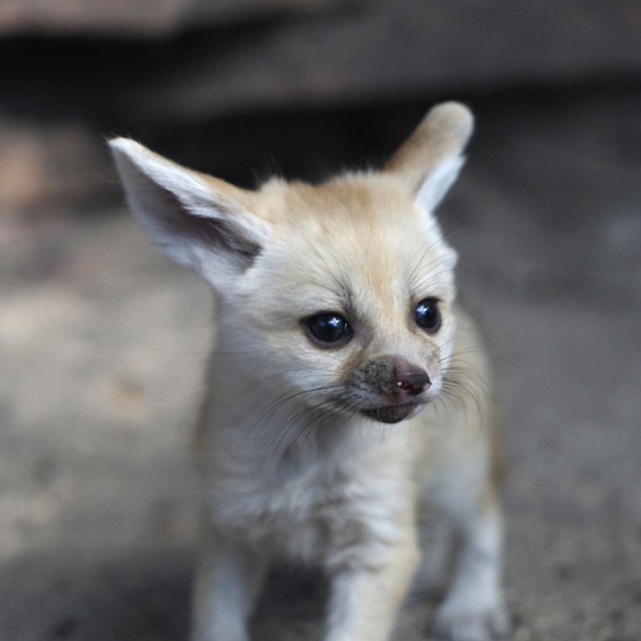 samiemiliedetyonishi 9 Самые милые детеныши животных за 2012 год