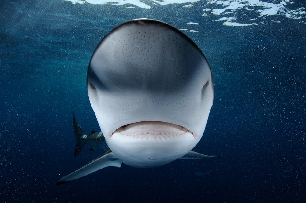 shark01 Акулий промысел в Аравийском море