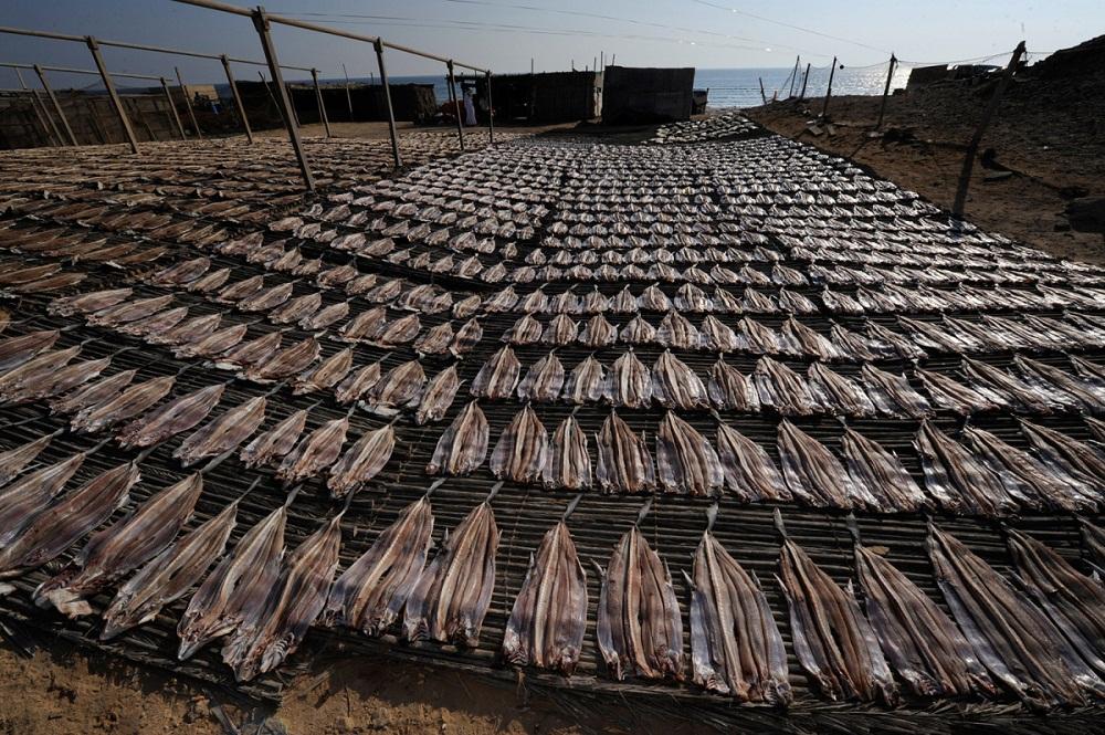 shark10 Акулий промысел в Аравийском море