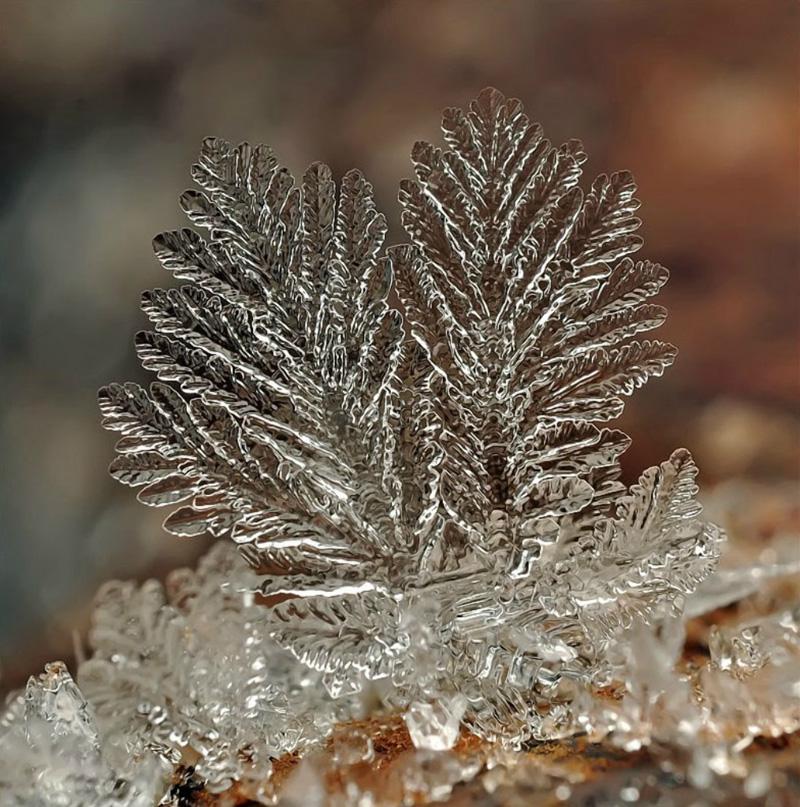 snejinkimakro 11 Снежинки. Фотограф Андрей Осокин