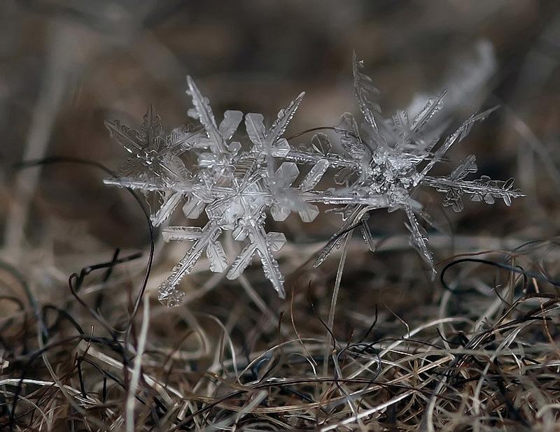snejinkimakro 8 Снежинки. Фотограф Андрей Осокин