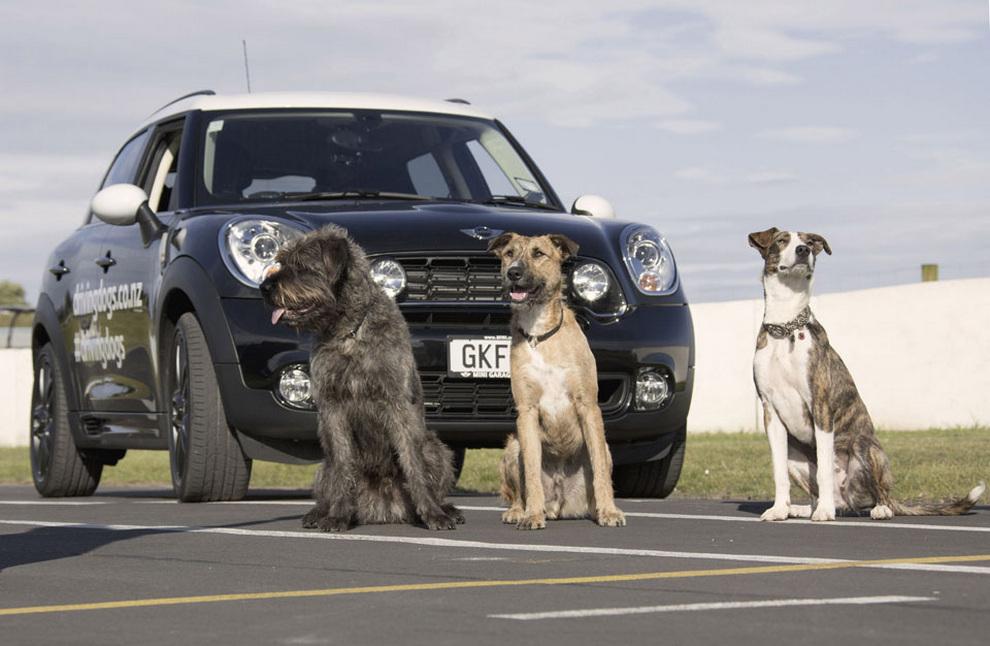 Картинки собака и машина