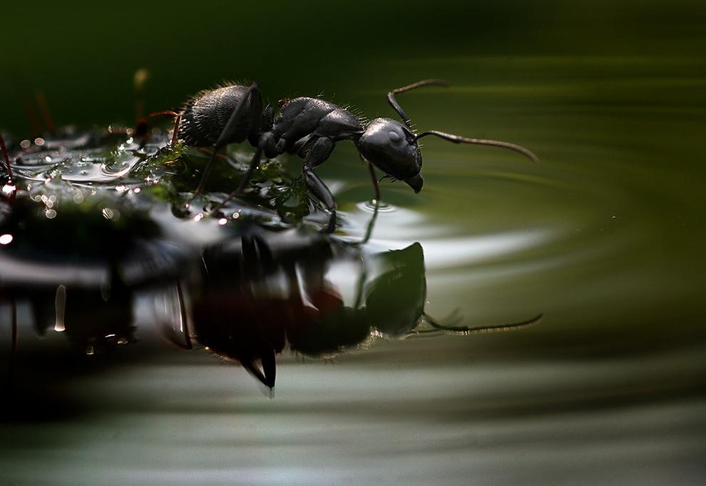 ulitkiinasekomie 18 Улитки и насекомые в макрофотографиях Вадима Трунова