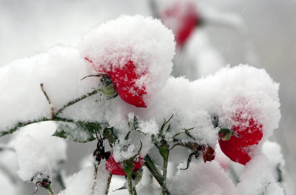 zima13 Снежный декабрь 2012