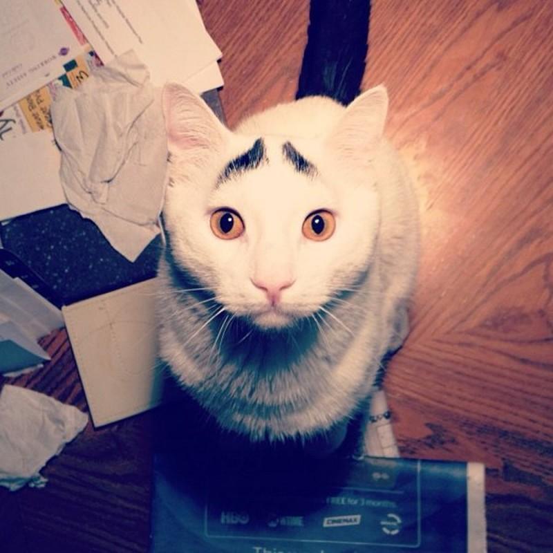 Котик с бровями