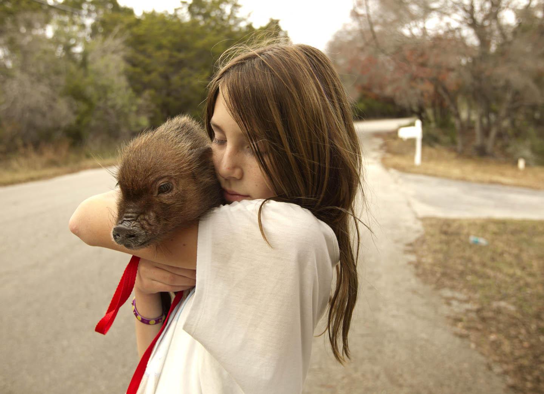 Большая любовь для миниатюрной свинки
