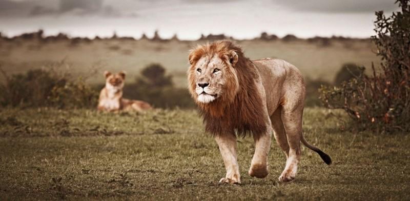 Животные Африки в великолепных фотографиях Клауса Тиджа
