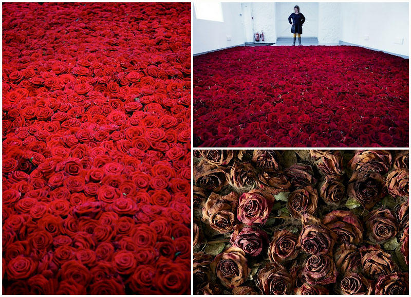 производство фотографии миллионы алых роз избери свой верный