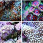 Удивительная макросъемка кораллов