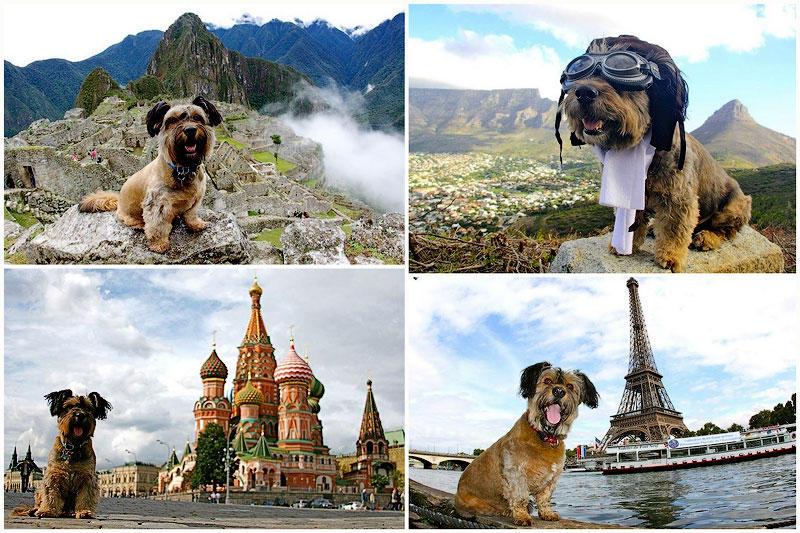 TEMP59 Оскар   пес путешественник