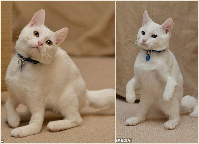 TEMP77 Котик инвалид который ходит на локтях
