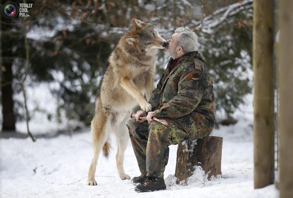 WernerFreund01 Изучая волков