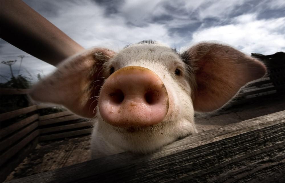 animalsfaces14 Мордахи... и не только