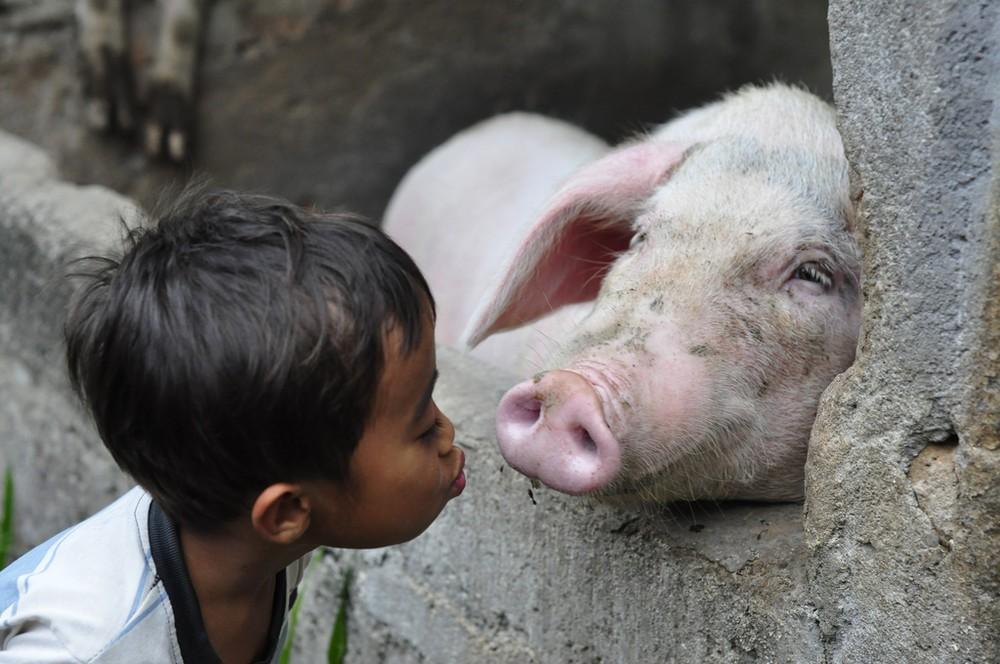 animalsfaces15 Мордахи... и не только