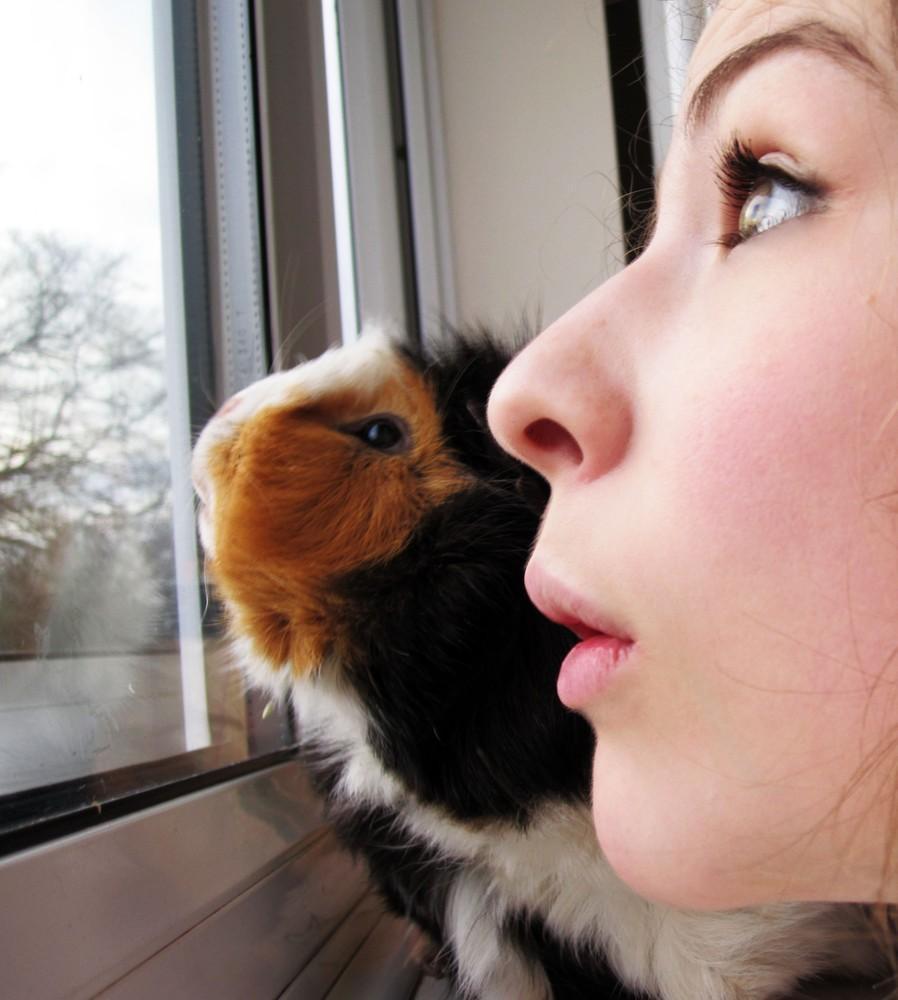 animalsfaces16 Мордахи... и не только