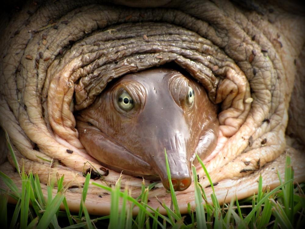 animalsfaces18 Мордахи... и не только