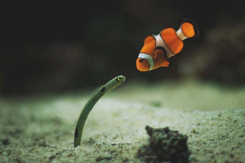 Красочные рыбки со дна океана
