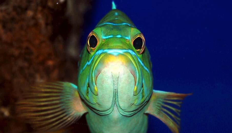 Смешные картинки морды рыб