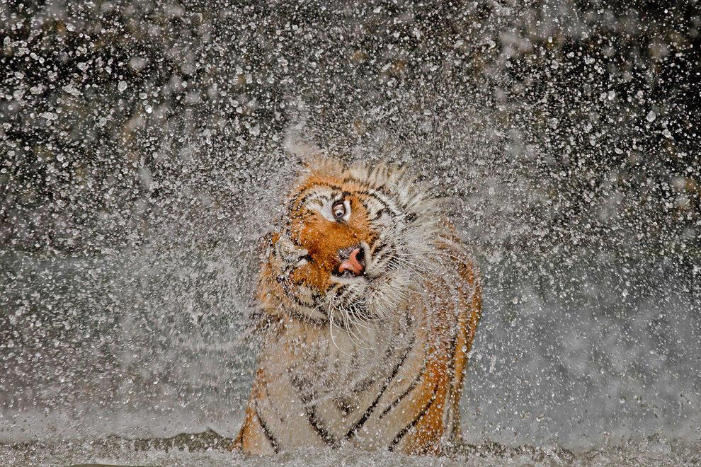 natgeocontest01 Победители фотоконкурса от National Geographic 2012