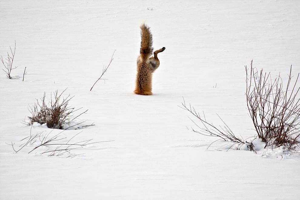 natgeocontest07 Победители фотоконкурса от National Geographic 2012