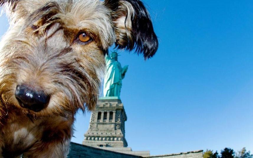 oscarthedog07 Оскар пес путешественник