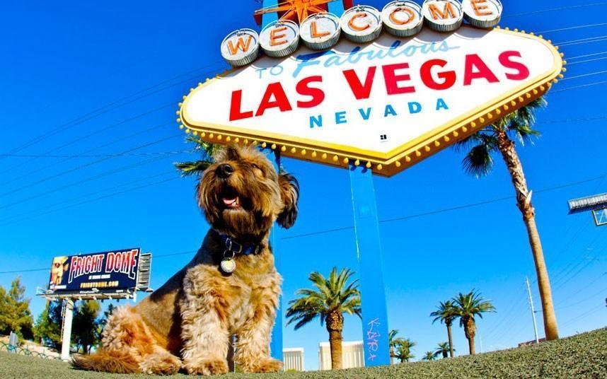 oscarthedog09 Оскар пес путешественник