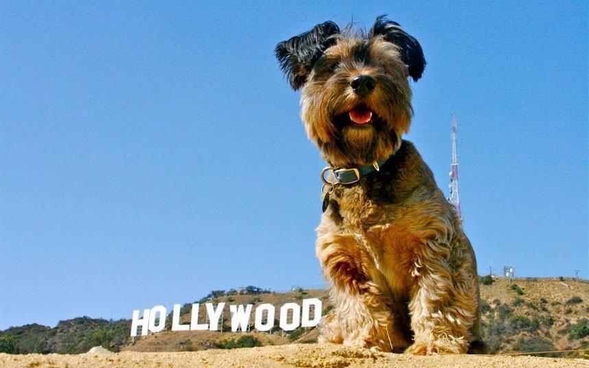 oscarthedog11 Оскар пес путешественник