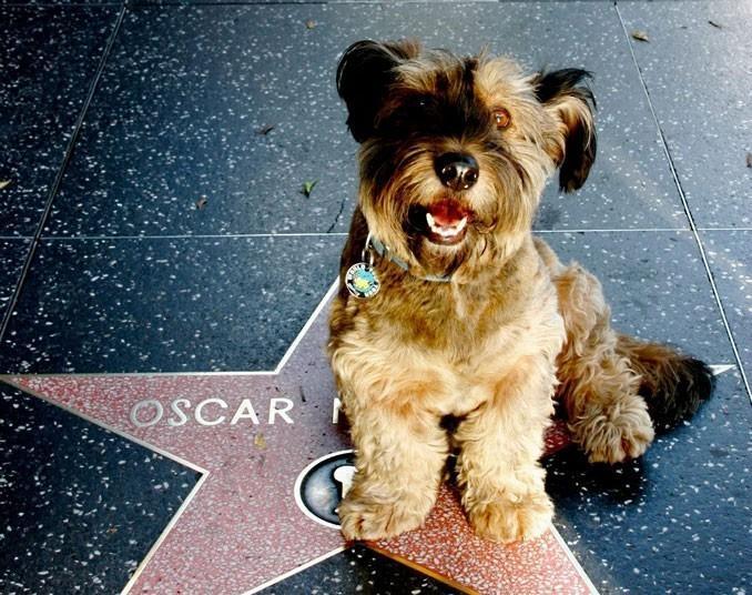 oscarthedog12 Оскар пес путешественник