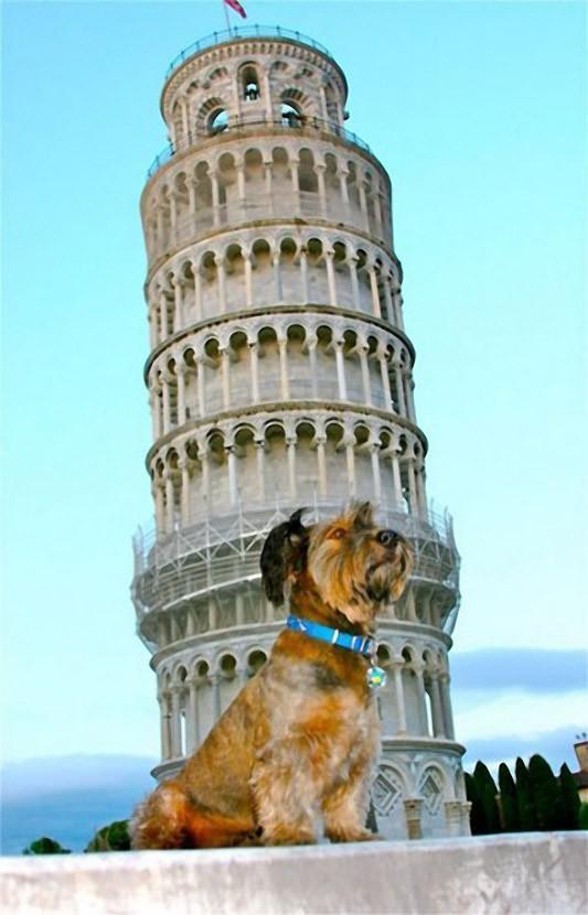 oscarthedog17 Оскар пес путешественник