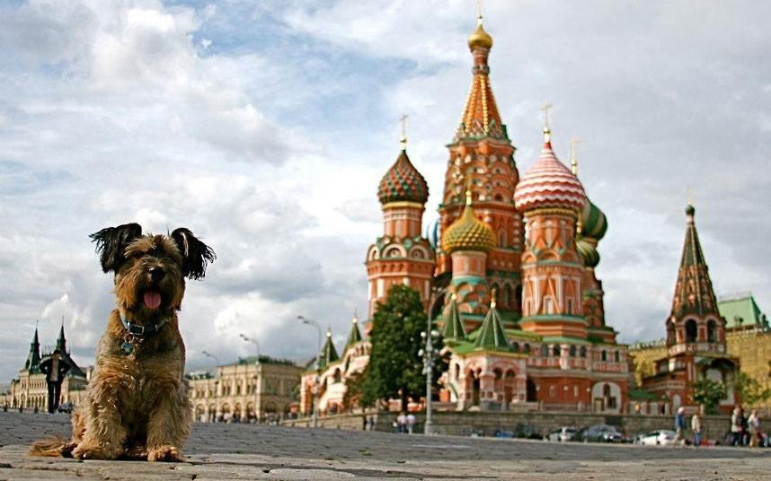 oscarthedog18 Оскар пес путешественник