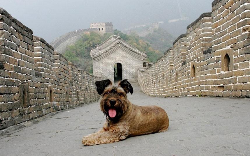 oscarthedog26 Оскар пес путешественник