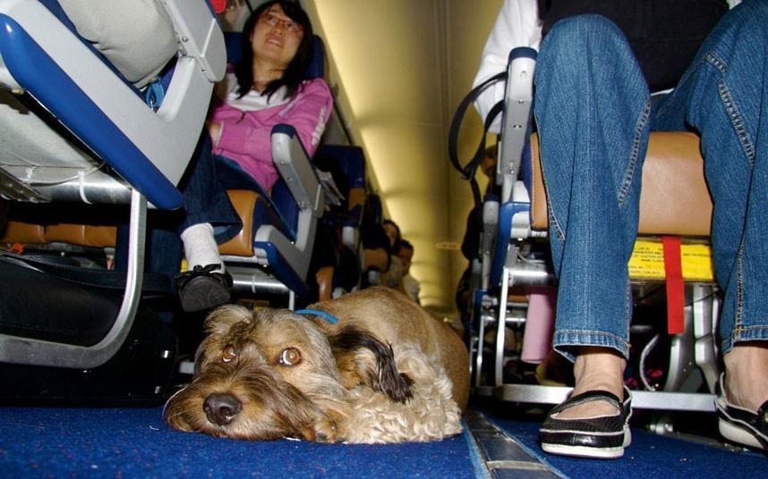 oscarthedog27 Оскар пес путешественник