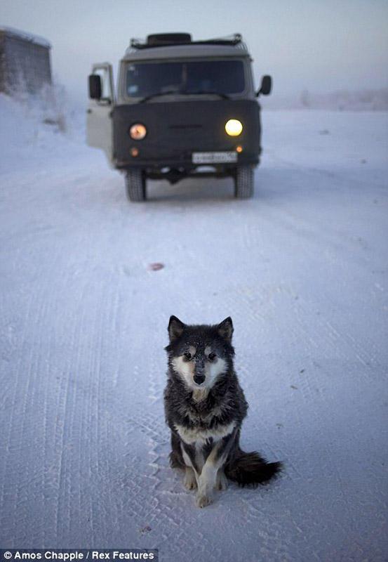 oymyakon03 Село Оймякон   самый холодный населенный пункт в мире