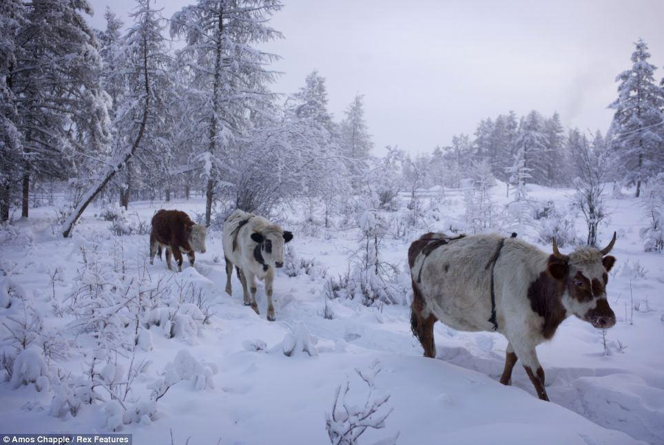oymyakon07 Село Оймякон   самый холодный населенный пункт в мире