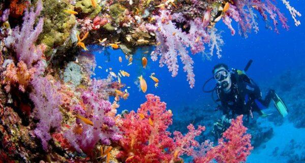 10 фактов о Красном море