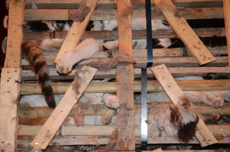 savedcats02 Китайские волонтеры спасают 1000 кошек от участи быть съеденными