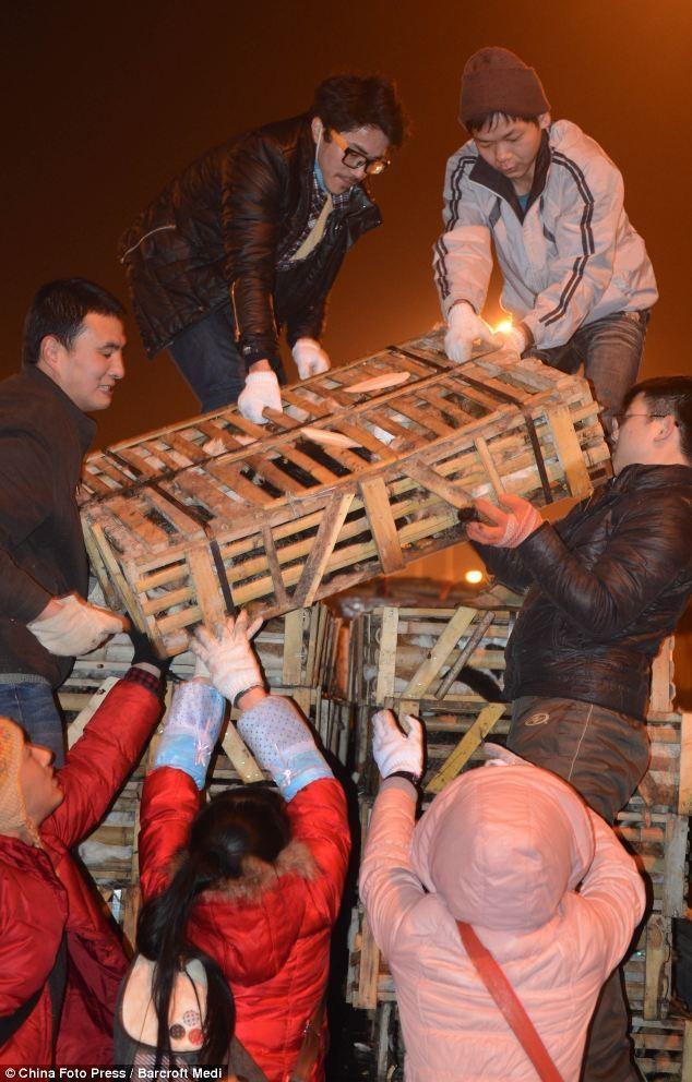 savedcats04 Китайские волонтеры спасают 1000 кошек от участи быть съеденными