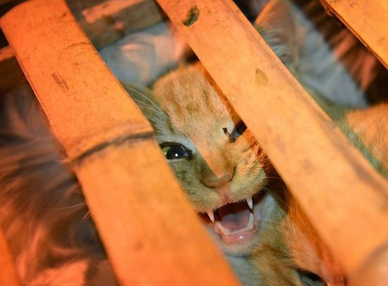 savedcats07 Китайские волонтеры спасают 1000 кошек от участи быть съеденными