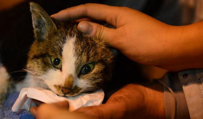 savedcats10 Китайские волонтеры спасают 1000 кошек от участи быть съеденными
