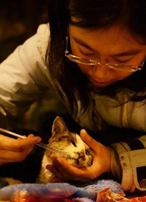 savedcats14 Китайские волонтеры спасают 1000 кошек от участи быть съеденными