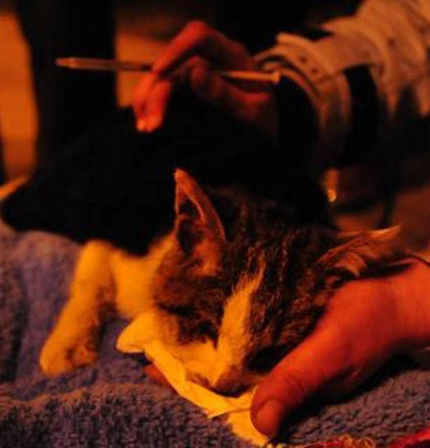 savedcats16 Китайские волонтеры спасают 1000 кошек от участи быть съеденными