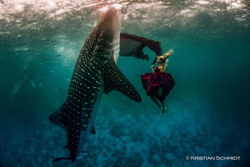 sharkshoot01 800x533 Эффектная подводная фэшн съемка с китовой акулой