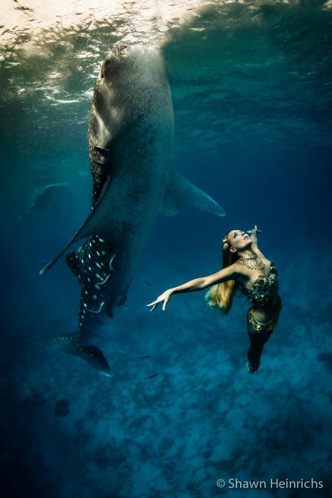 sharkshoot02 Эффектная подводная фэшн съемка с китовой акулой
