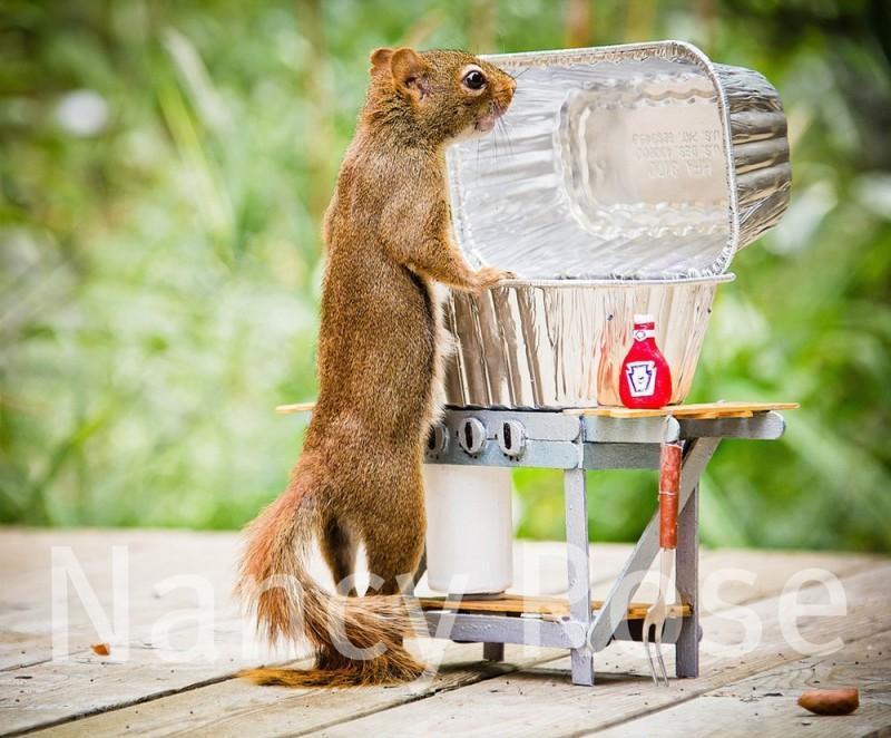 squirrels01 800x662 Забавные белочки Нэнси Роуз
