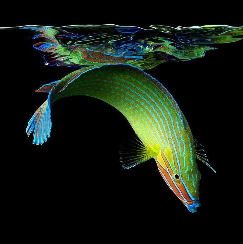 underwater011 Неоновые портреты экзотических морских обитателей